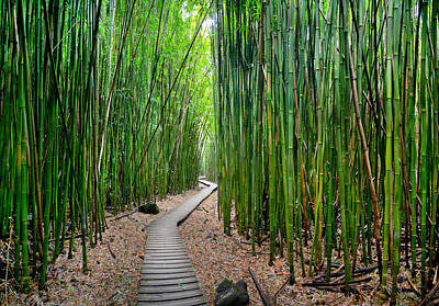 Going Green Photograph - Bamboo Brilliance by Sean Davey