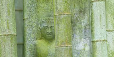 Bamboo Photograph - Bamboo Buddha by Cora Niele