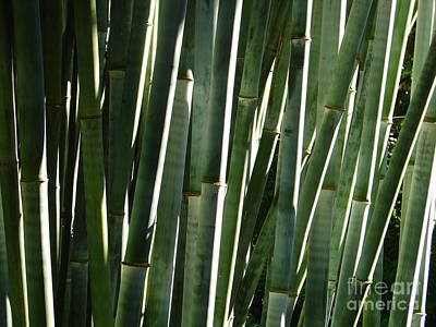 Bamboo Canes Art Print by Lew Davis