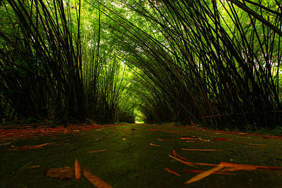 Bamboo Cathedral Art Print by Dexter Browne