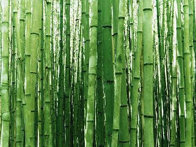 Photograph - Bamboo Cell Phone Cases And Wall Art by Shane Dufoe