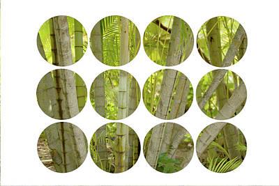 Bamboo Photograph - Bamboo Circles by Ramona Murdock
