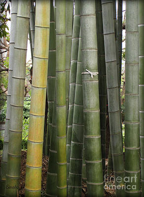 Photograph - Bamboo by Eena Bo