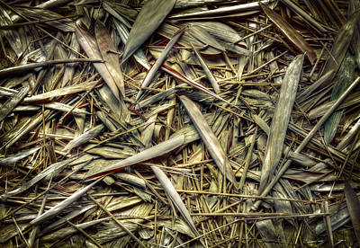 Photograph - Bamboo Floor by Wayne Sherriff