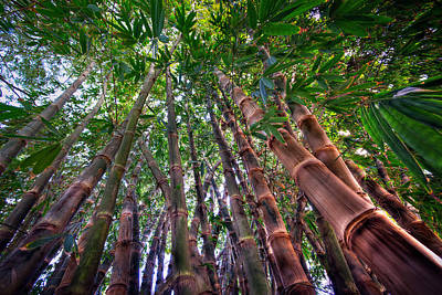 Photograph - Bamboo For You by Brad Grove