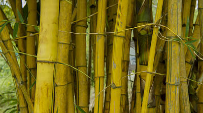 Bamboo Photograph - Bamboo Forest by Aged Pixel