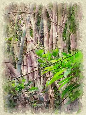 Bamboo House Digital Art - Bamboo Forest At Lamma Island Hong Kong by Yury Malkov