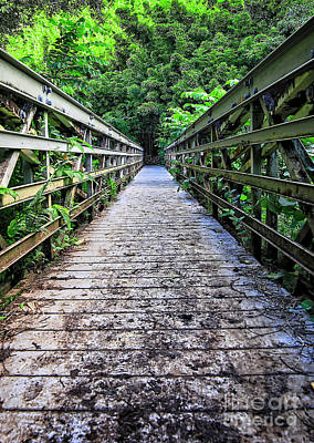 Bamboo Photograph - Bamboo Forest Bridge by Edward Fielding