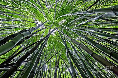 Bamboo Forest Original