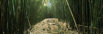 Bamboo Photograph - Bamboo Forest, Hana Coast, Maui by Panoramic Images