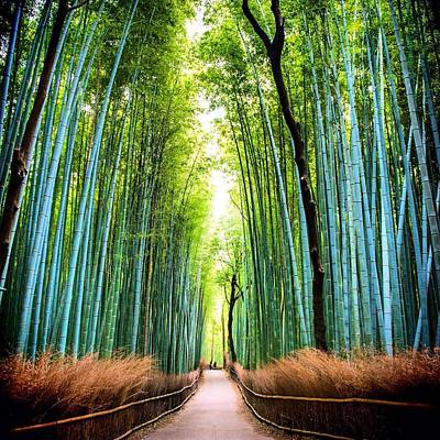 Bamboo Forest Art Print by James Kang / Eyeem