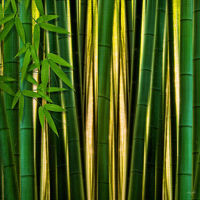 Bamboo Forest- Bamboo Artwork Art Print by Lourry Legarde