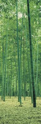 Bamboo Forest Nagaokakyo Kyoto Japan Art Print by Panoramic Images