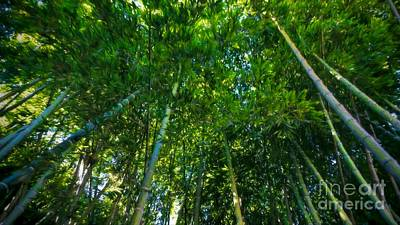 Photograph - Bamboo Forest by Peggy Hughes