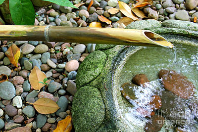 Drawing - Bamboo Fountain by Michelle Wolff