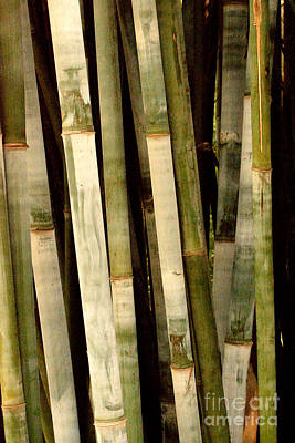 Photograph - Bamboo by Gary Smith