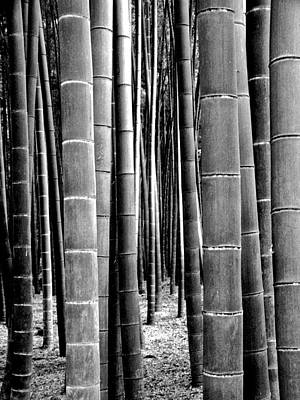 Photograph - Bamboo Grove 3 by Larry Knipfing
