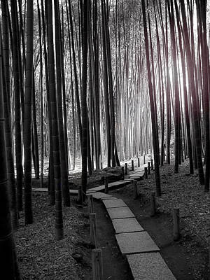 Bamboo Grove At Dusk Art Print