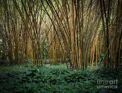 Photograph - Bamboo Grove by Blake Webster