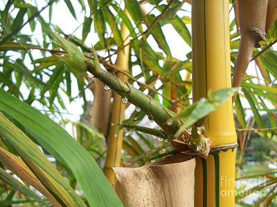 Bamboo  Art Print by Heather Duncan
