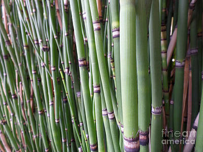 Photograph - Bamboo by HEVi FineArt