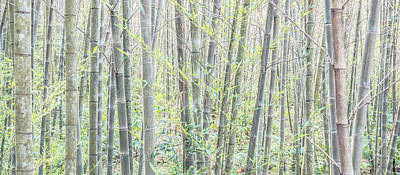 Photograph - Bamboo High Key by Alexander Kunz
