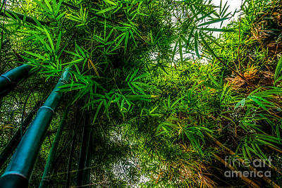 bamboo III - green Art Print by Hannes Cmarits