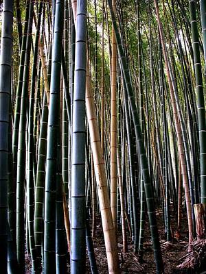 Photograph - Bamboo In Sagano Japan by Jacqueline M Lewis