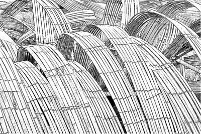 Kizuna Photograph - Bamboo by John VonTempske