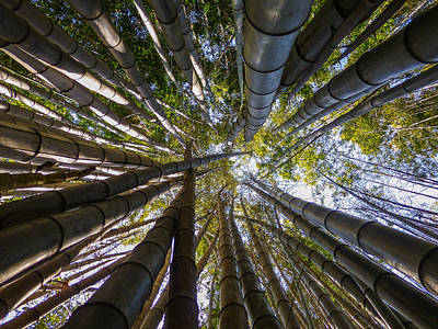 Digital Art - Bamboo Jungle by Gandz Photography