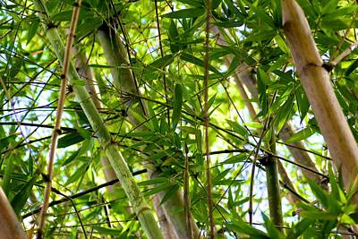 Tropical Photograph - Bamboo by Kimberly Reeves