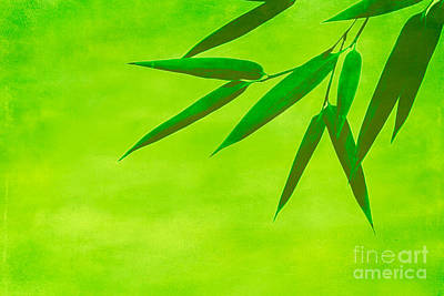 Bamboo Leaves Print by Hannes Cmarits