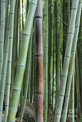 Photograph - Bamboo by Michelle Wolff