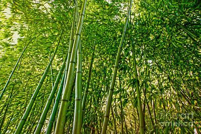 Digital Art - Bamboo by Nur Roy