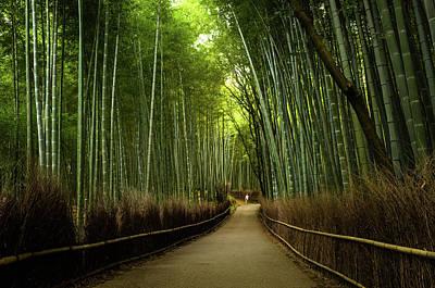 Photograph - Bamboo Path Near Arashiyama Region by Marser