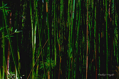 Photograph - Bamboo by Paulette B Wright