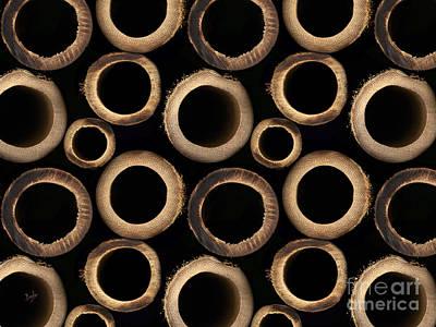 Bamboo Rings Art Print by Bedros Awak