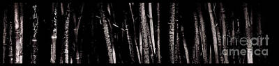 Photograph - Bamboo by Ron Smith