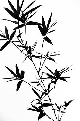 Bamboo Shadows Print by Jenny Rainbow