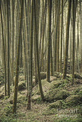 Photograph - Bamboo Silence by Alexander Kunz