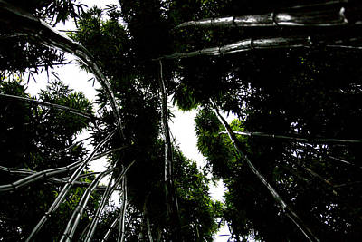 Photograph - Bamboo Skies 1 by Jennifer Bright