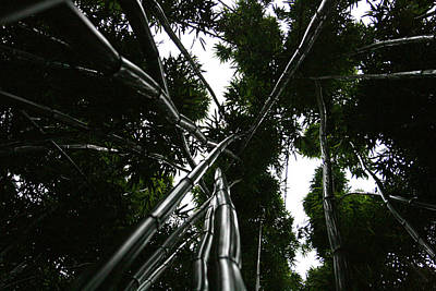 Photograph - Bamboo Skies 2 by Jennifer Bright