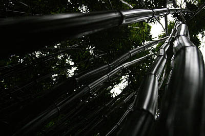Photograph - Bamboo Skies 5 by Jennifer Bright