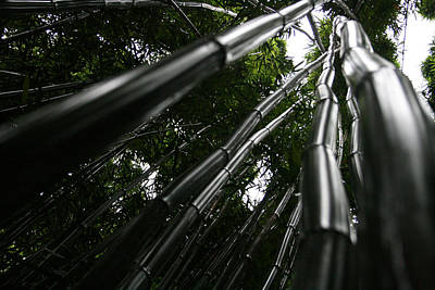 Photograph - Bamboo Skies 6 by Jennifer Bright