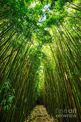 Bamboo Wall Art - Photograph - Bamboo Sky - The Magical And Mysterious Bamboo Forest Of Maui. by Jamie Pham
