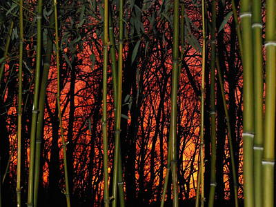 Photograph - Bamboo Sunset by Sharon Costa