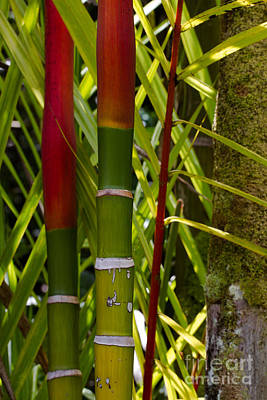 Photograph - Bamboo Too All Profits Go To Hospice Of The Calumet Area by Joanne Markiewicz