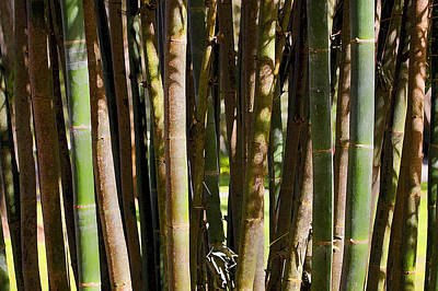Photograph - Bamboo Too by Rich Franco