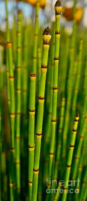 Photograph - Bamboo by Tracey McQuain