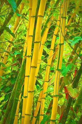 Bamboo Trees Art Print
